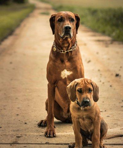Hunde Balou und Roxy